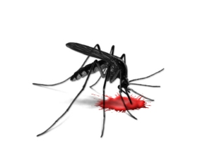 Can-Mosquitoes-transmits-HIV