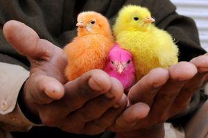 Нови трендове в животновъдството 37-694