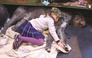 И момиченцето на шоуто на кучетата спи с любимците си