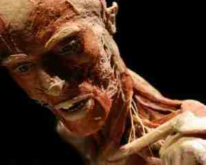 plastinate_body_close_up_184x193