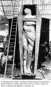Fossilized_Irish_Giant-late1800s