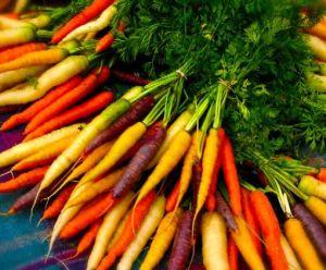 Моркови e