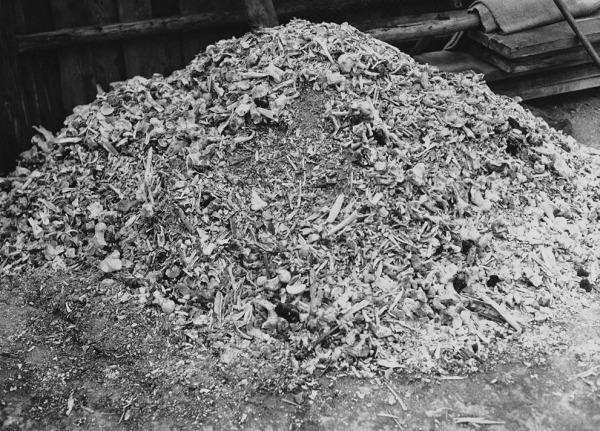 Зверства фашисти Пепел от 88 тела Бухенвалд_orig